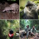 Cambodian Wildlife in danger as ecotourism sector collapses